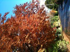 Coombe Dingle Autumn