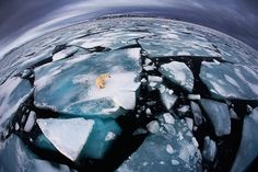 The image highlights the plight of not just the polar bear, but the entire world, as every year more of the polar ice caps melt. It was the winning photograph in 'The World in Our Hands' category of this year's Wildlife Photographer of the Year Awards. By, Anna Henly