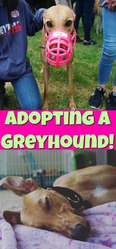 Adopting or Fosterin