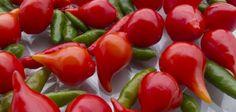 Pimenta biquinho: como plantar e os seus benefícios na dieta