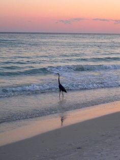 Destin, FL 2011