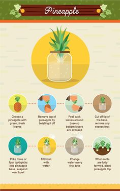 Reduce food waste by using food scraps to regrow vegetables with tips from The Food Revolution Network. Click in and find 19 types of veggies and herbs that can be enjoyed over and over like avocados, basil and cilantro. Growing Veggies, Growing Plants, How To Grow Plants, Garden Plants, Indoor Plants, Garden Bed, Container Gardening, Gardening Tips, Vegetable Gardening