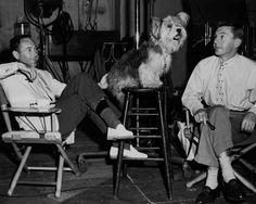 A Skye Terrier in a movie called The Tender Trap with Frank Sinatra. Responsibility To Protect, Skye Terrier, Butches, Animal Kingdom, Movie, Dog, Celebrities, Animals, Beauty