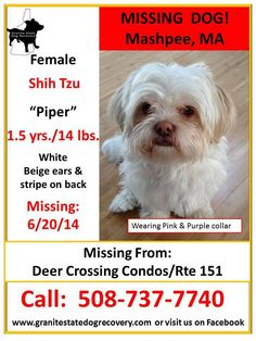 Cape cod missing pets added 2 new photos at 02667 for Call girls cape cod