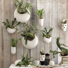 Shane Powers Ceramic Wall Planters - modern - products - West Elm