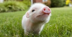 Have You Heard? The Meat You Eat Will Never Be The Same | The Animal Rescue Site Blog