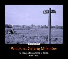 Widok na Galerię Mokotów. – Ta krowa stałaby teraz w Zarze.Rok 1964. Xnxx, Warsaw, Poland, Einstein, Fun Facts, Harry Potter, Funny Memes, Humor, Cool Stuff