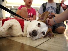Pets Unstressing Passengers becoming more popular in airports across the country