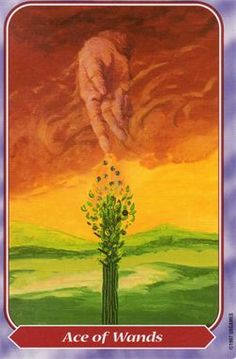 Ace of Wands from The Spiral Tarot
