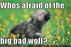 Funny Wolf Pictures with Captions   Cheezburger.com - All your funny in one place.