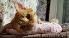 Lounging #cat #kitty #kitten #orangetabby #domesticshorthair #chilling