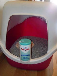 TRUCO PARA QUITAR EL MAL OLOR DE LA CAJA DEL GATO Seguro que algunos de vosotros y vosotras tendréis gatos en casa o bien alguien de la familia los tiene. Evidentemente tienen siempre su caja de tierra donde hacer sus necesidades, pero claro esa caja por mucho que estés limpiándola, en algún momento nos perfuma la casa...... http://compartendos.blogspot.com.es/2014/05/truco-para-quitar-el-mal-olor-de-la.html