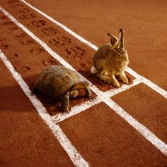 """""""In the first half of the race, don't be an idiot. In the second half, don't be a wimp.""""  Via @Runner's World"""