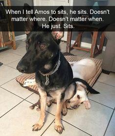 Sit Ubu, Sit. Good dog!