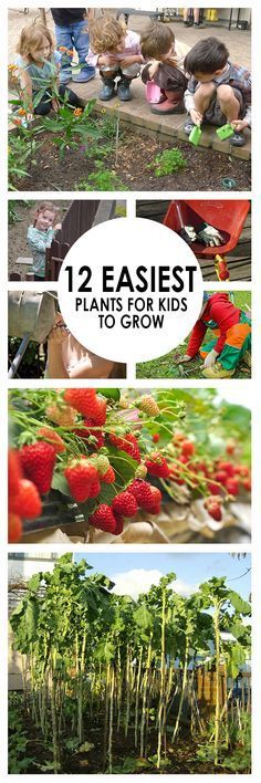 Gardening can be a great way to relieve stress and spend time with your loved ones. If you find yourself hoping and praying that your kid's will share the love of gardening with you, spark their interest and get them growing these great plants!