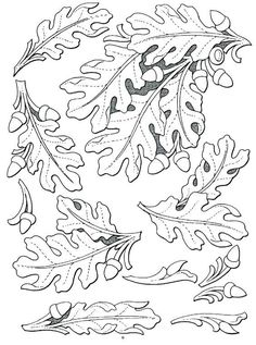 Image result for steps to tooling an oak leaf in leather