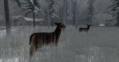 https://flic.kr/p/2315StE | Fallow Deer-002 | The Fallow Deer at Binemust maps.secondlife.com/secondlife/Binemust/132/156/717   Thank you for such beauty, dear Bine Rodenberger!