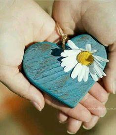 My Flower, Beautiful Flowers, Daisy Love, Tree Woman, Beautiful Mind, Love Heart, Flower Decorations, Heart Shapes, Great Gifts