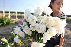 Nejkrásnější smetanový odstín. Tulipán Verona má pevné stonky, hodí se nádherně do záhonu i kytice, vydrží velmi dlouho a snadno předčí vzhledem i růže a pivoňky. Verona, Belle Epoque, Vegetables, Vegetable Recipes, Veggies