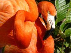 Seaworld Flamingo (154 pieces)