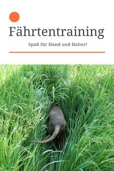 Fährtentraining - Viel Spaß für Hund und Halter