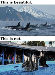 See the difference?  so do I!  #DontBuyATicket #EmptyTheTanks #Blackfish