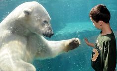 Today is International Polar Bear Day- please help protect these beautiful and fascinating animals ( and our planet) by adjusting your thermostat just a few degrees http://www.polarbearsinternational.org/our-work/action-programs/international-polar-bear-day