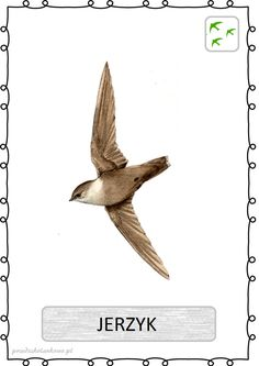 Jerzyk Clip Art, Birds, Education, Geography, Therapy, Pictures, Animaux, Biology, Animals