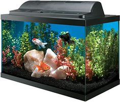 """All Glass Aquarium Tank and Eco Hood Combo. Buy """"All Glass Aquarium Tank and Eco Hood Combo"""" after comparing prices from the top online fish supply retailers. Save on tanks, filters, and accessories for your fish. Betta Aquarium, All Glass Aquarium, Aquarium Hood, Glass Fish Tanks, Small Fish Tanks, Saltwater Fish Tanks, Aquarium Kit, Betta Fish Tank, Freshwater Aquarium Fish"""
