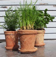 Innred med grønne planter | DNB Eiendom