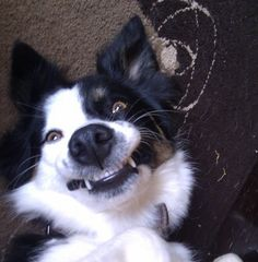 """So do I get the role as """"Last of The Vampire Collies"""" or not 'cos I can't keep this up much longer"""