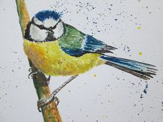 Blue Tit Bird Art / Blue Tit garden bird painting, Wildlife art, Bird watcher, Gift for Bird Lover, Original acrylic ink, Kitchen Wall Art by marjansart on Etsy