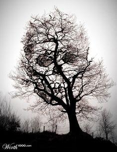 tree skull illusion