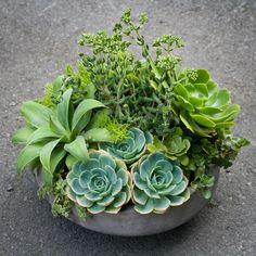 Succulent arrangements - centerpieces don't have to out of flowers!