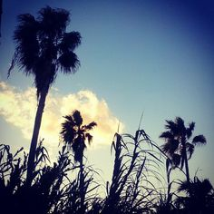 Palms by the sea