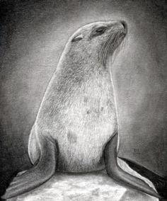 how to draw a realistic seal, cape fur seal step 21 Best Picture For Sealife Drawing animals For You Pencil Drawings Of Animals, Animal Sketches, Art Sketches, Drawing Animals, Cat Drawing, Painting & Drawing, Drawing Guide, Sketching Tips, Drawing Step