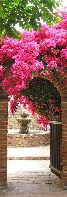Pink bougainvillea ... http://www.bhg.com/gardening/gardening-trends/top-garden-trends/