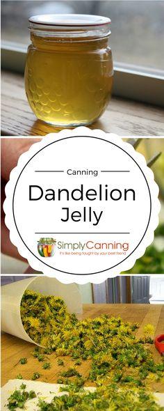 Dandelion jelly tastes a bit like honey. It is true.  My youngest declared it good!