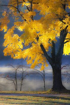 Sunlit Tree, Asheville, North Carolina