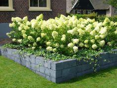 Ideetjes voor de inrichting van de tuin - handig, mooi etc - Mooie pluimhortensia's in verhoogde border