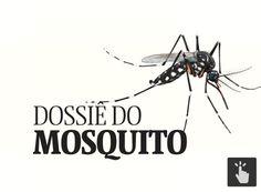 Clique e entenda tudo sobre o Aedes aegypti, mosquito transmissor da dengue