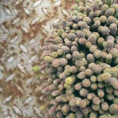 Našla som starý kaktus. 🌵 🌵 😆 #zijedlho #kaktusovalaska #kaktusovamania…