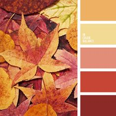 A striking example of an almost monochrome combination of rich shades of pink. This colour palette of sea sunset colours will be very helpful if you are de Orange Color Palettes, Warm Colour Palette, Warm Colors, Fall Color Schemes, Color Combos, Autumn Leaf Color, Autumn Leaves, Warm Autumn, Wedding Color Pallet