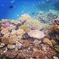 Paradise! #australia #cairns #greatbarrierreef #underthesea #sea #relax #holiday by agnesbubu11 http://ift.tt/1UokkV2