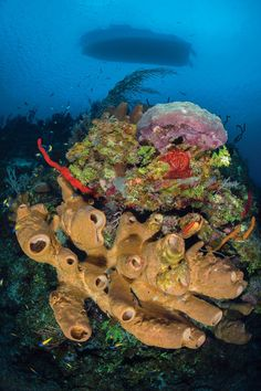 Bloody Bay Wall, Little Cayman . be sure to read this great story about diving Cayman Islands. One of my favorite dives. Scuba Travel, Beautiful Ocean, Grand Cayman, Sea And Ocean, Cayman Islands, Amazing Adventures, Underwater Photography, Ocean Life, Countries Of The World