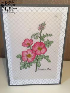 Sweetbriar Rose, Stampin Up, mixing pin (1)