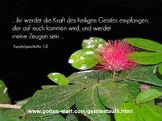 apostelgeschichte 1:8 http://www.gottes-wort.com/geistestaufe.html