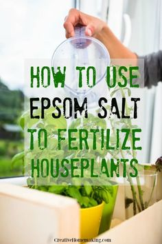 Expert tips for using epsom salt to fertilize houseplants. How much epsom salt to give your indoor plants for maximum benefit. Expert tips for using epsom salt to fertilize houseplants. How much epsom salt to give your indoor plants for maximum benefit. Gardening For Beginners, Gardening Tips, Balcony Gardening, Gardening In An Apartment, Garden Plants, Porch Plants, Greenhouse Plants, Hydroponic Gardening, Shade Garden