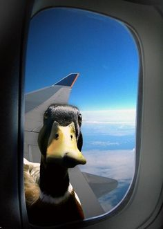 anatadaephobia: the fear that somewhere, somehow a duck is watching you. @Chelsea Rose