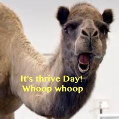 What day is it? Thrive-day! Whoop whoop :-)Sign up for Free with no obligation at: https://tdegraff.le-vel.com/ You don't want to miss out on this amazing experience!!